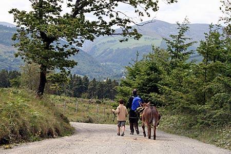 Irland - Wandern mit Esel im County Wicklow