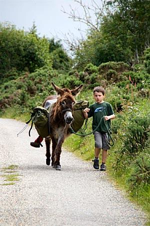 Irland - Brav lässt Ringo sich von Juri führen