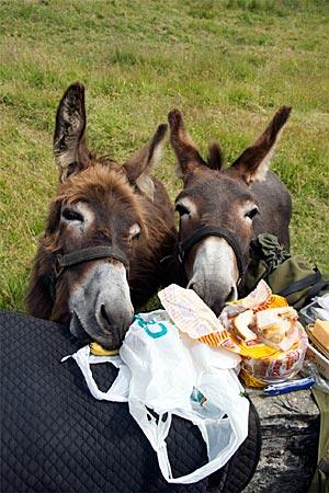 Irland - Picknick mit Eseln
