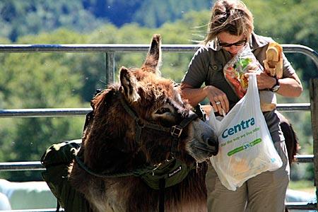 Irland - Wandern mit Esel in den Wicklow Mountains