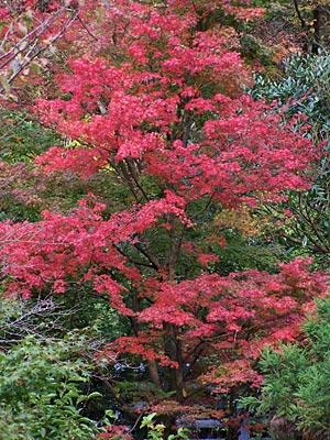 Japan Radtour Herbst