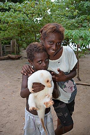 Papua-Neuguinea - Kuskus