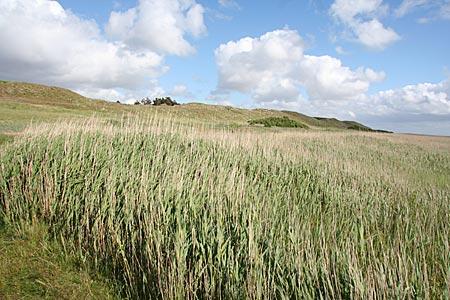 Dänemark - Mandö Landschaft