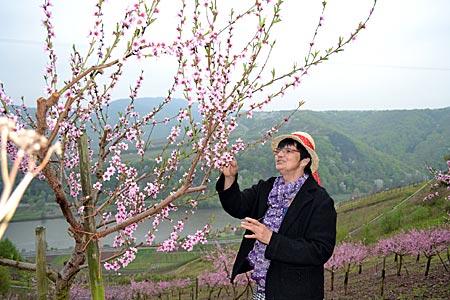 Gärtnerin Monika Servaty prüft im ehemaligen Weinberg hoch über der Mosel den Stand der Blüte