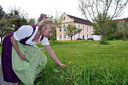 Tölzer Land - Kräuterpädagogin Erika Ledermüller auf der Suche nach den Zutaten für einen Imbiss