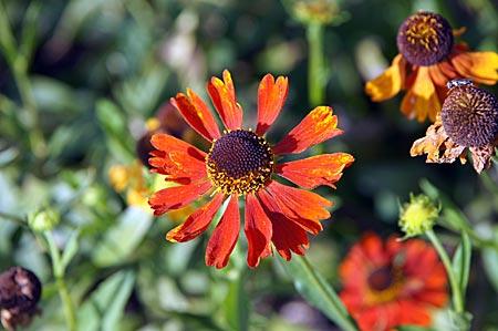 Rietberg - Gartenschau - Blüten