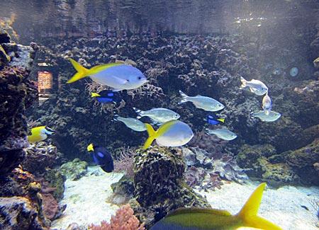 Stralsund - Südseeaquarium im Meeresmuseum