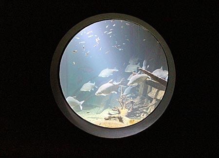 Stralsund - Ozeaneum - Blick in ein Aquarium der Nordmeere
