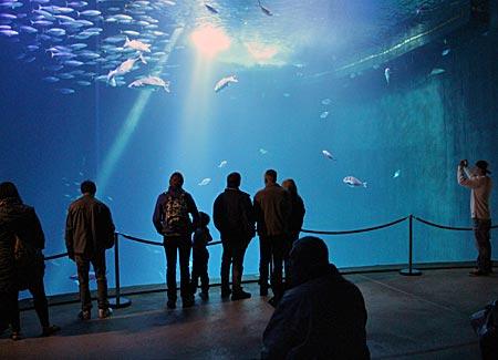 Stralsund - Ozeaneum - Fischschwärme im Tiefseebecken