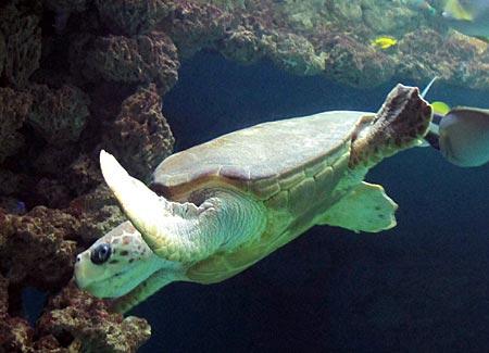 Stralsund - Schildkröten im Meeresmuseum