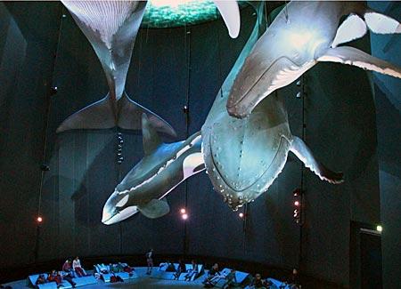 Stralsund - Meeresmuseum - Wale in Originalgröße