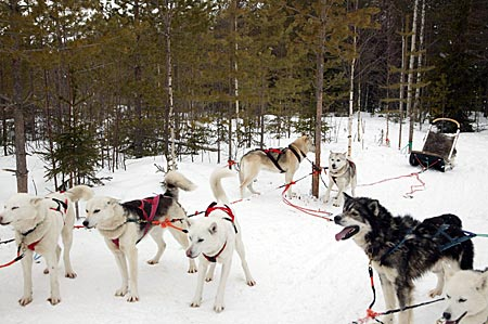 Finnland - Huskies in Lappland