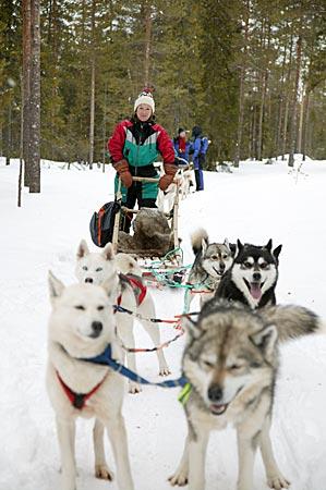 Finnland - Schlitten mit Husky-Gespann