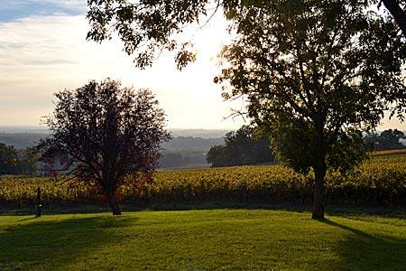 Frankreich - Gascogne - Die stille Heimat des Armagnacs: Nachmittagsstimmung in den Weinlagen bei Mansencome in der Nähe von Condom
