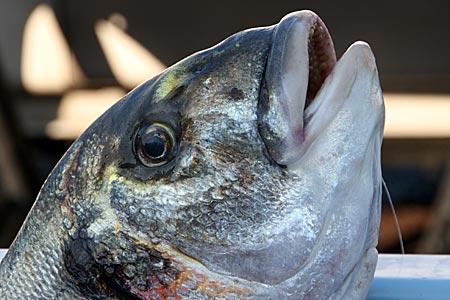 Marseille - Fisch