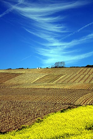 Frankreich - Champagne-Ardenne - Landschaft