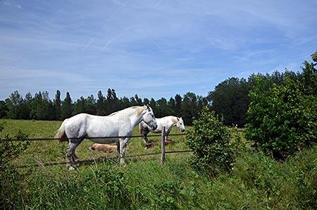 Frankreich - Normandie - Perche - Percherons