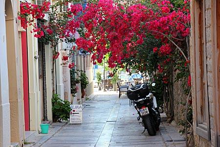Griechenland - Nauplia - üppig mit Drillingsblumen berankte Altstadt