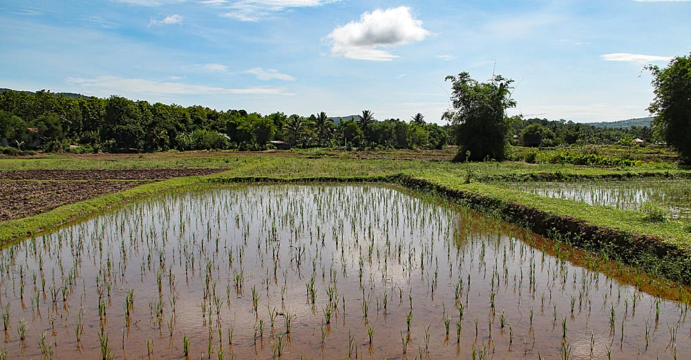 Reis. Neue Ideen und alte Traditionen im Nordosten Thailands