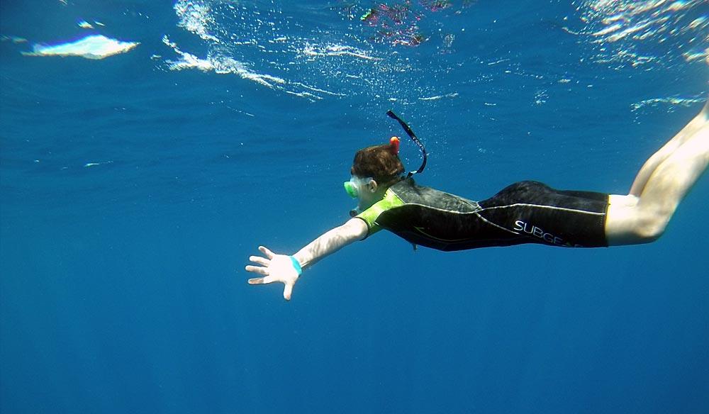 Azoren mit Delphinen