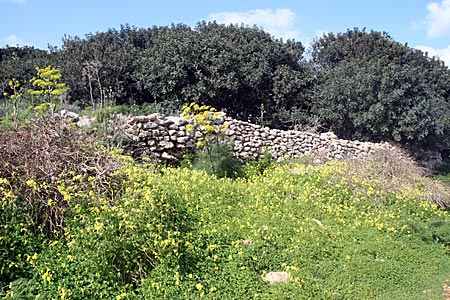 Comino - Landschaft