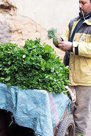 Marokko - frische Minze auf einem Verkaufskarren in Fes