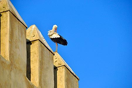 Marokko - Meknès, Stadt der Mauern, mit Storch
