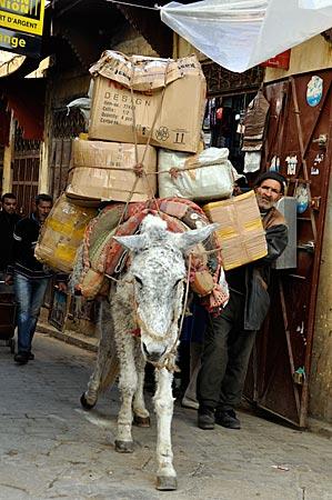 Mulitreiber im Souk von Fès, Marokko
