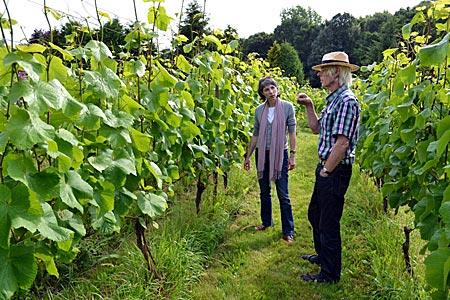 Niederlande - Flevoland nicht Bordeaux: Flachlandwinzer Johan Rippen in seinem Weingarten