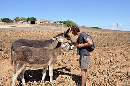 Portugal, Algarve, Parque Natural da Costa Vicentina, Via Algarviana, Wanderführer Nicolau da Costa mit Eseln