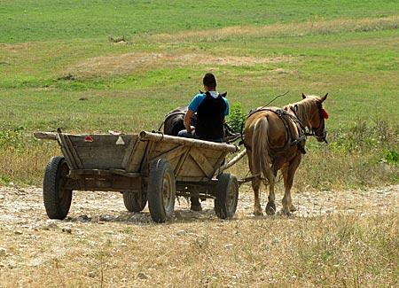 Rumänien- Transsilvanien - eine Caruta dient Bauern immer noch als Transportmittel