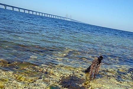 Schweden - Malmö - Öresundbrücke
