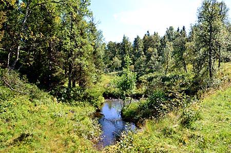 Schweden - Wasser ist auf dem Olafsweg allgegenwärtig