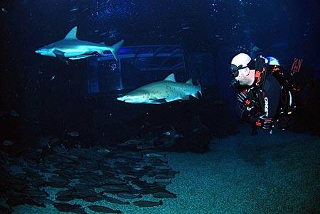 Mallorca - Tauchen mit Haien