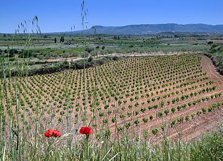 Spanien - Landschaft der Rioja