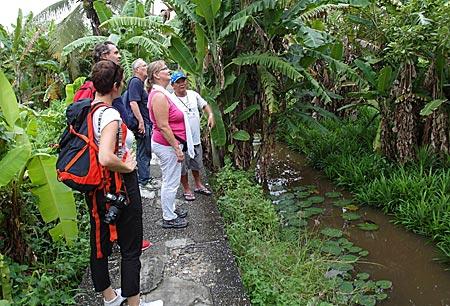 6541332f1a7fd Thailand - Bangkok - Tour durch das Dschungel- und Sumpfgebiet des Thonburi  District