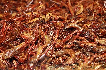 Thailand - Phitsanulok - frittierte Insekten