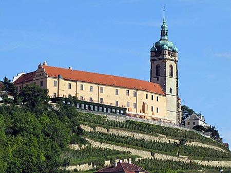 Tschechien - Melnik - Schloss Melnik umgeben von Weinreben